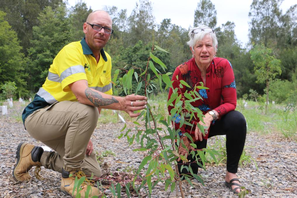 DIG IN: Fran Corner was involved earlier this year with the Worimi Green Team's Brett Chambers planting koala feed trees at Williamtown.